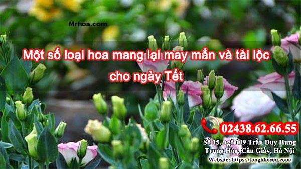 Một số loại hoa mang lại may mắn và tài lộc cho ngày Tết