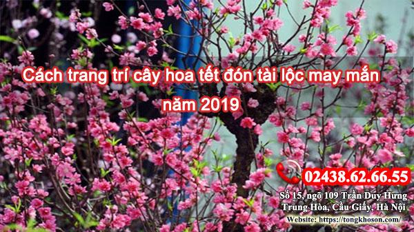 Cách trang trí cây hoa tết đón tài lộc may mắn năm 2019