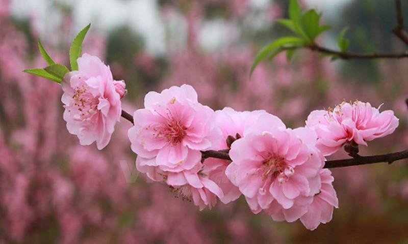 10  loại hoa trang trí phổ biến cho Tết tràn đầy sức sống